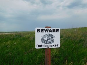 rattlesnake vaccine for dogs