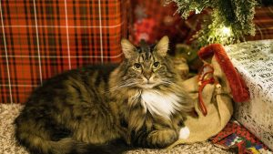 take care of pets during holidays